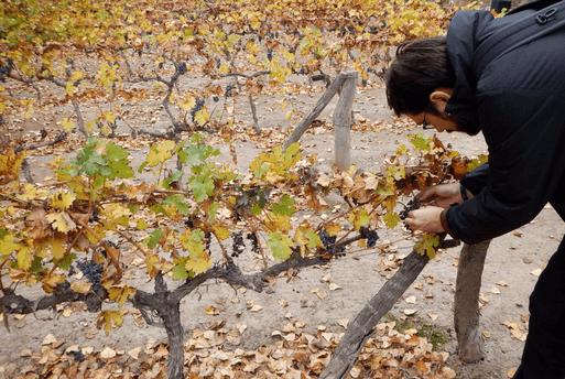 Argentine Wine Benegas