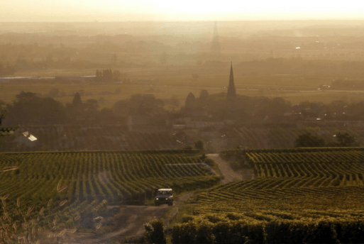 Wine Movies - Um ano na Borgonha