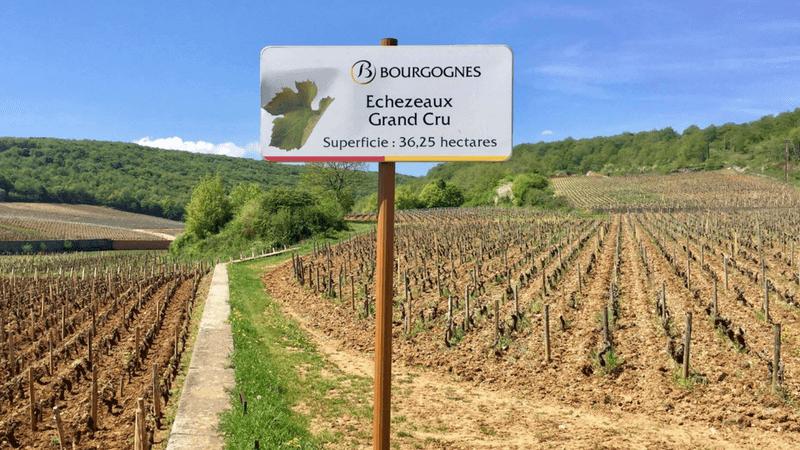 Rota dos Vinhos Grands Crus da Borgonha de bicicleta. Route des Grands Crus en vélo - Bourgogne | 1001 Dicas de Viagem