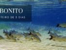 Roteiro de Viagem 5 dias em Bonito - O que fazer em Bonito | 1001 Dicas de Viagem