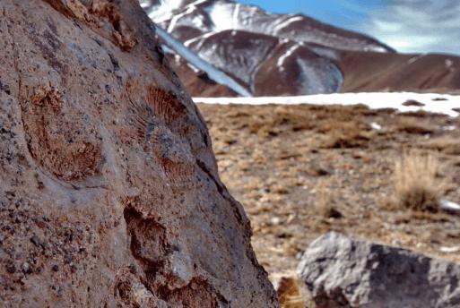 Aconcagua Mountain Climbing and Trekking - Dicas de Viagem