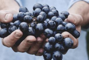 Vin naturel ou vin nature - Nature Wine | 1001 Dicas de Viagem Travel and Wine Blogger