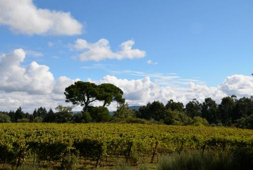 Portuguese Organic Wine - Julia Kemper Wines no Brasil